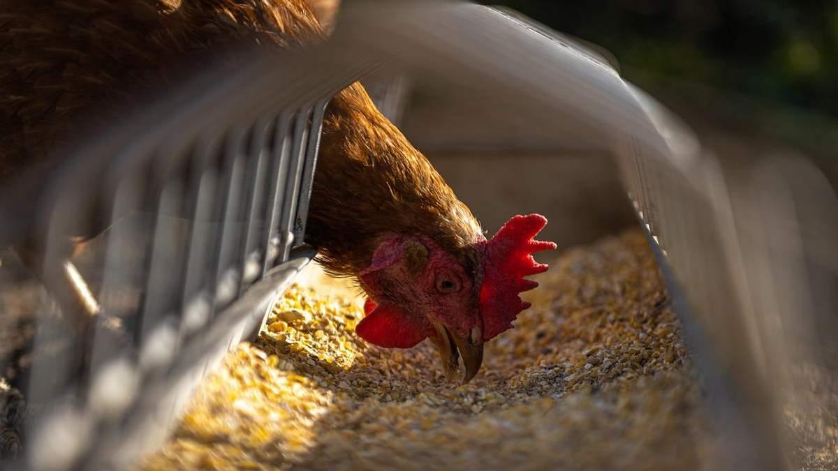 Украина будет экспортировать корм в Таиланд