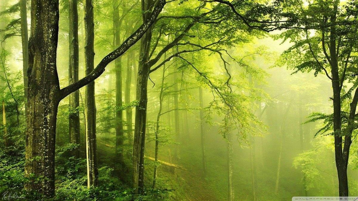 Лес в Украине