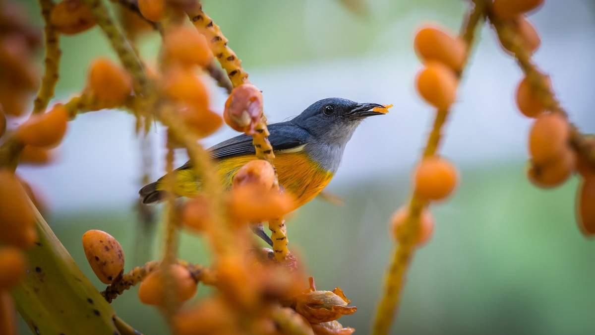 Чому птахи стали беззубими