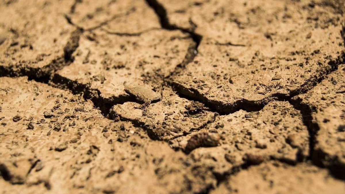В Украине будет аномально жаркое лето: как это повлияет на урожай
