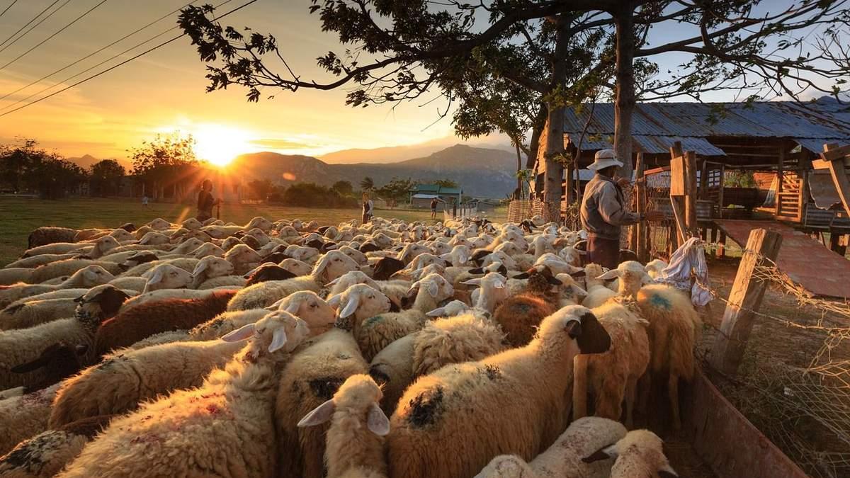 Майбутнє за органічним сільським господарством