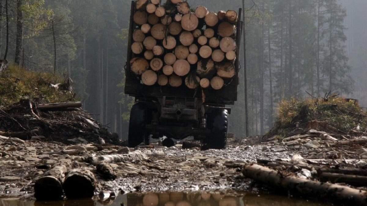 Вирубка лісів в Україні