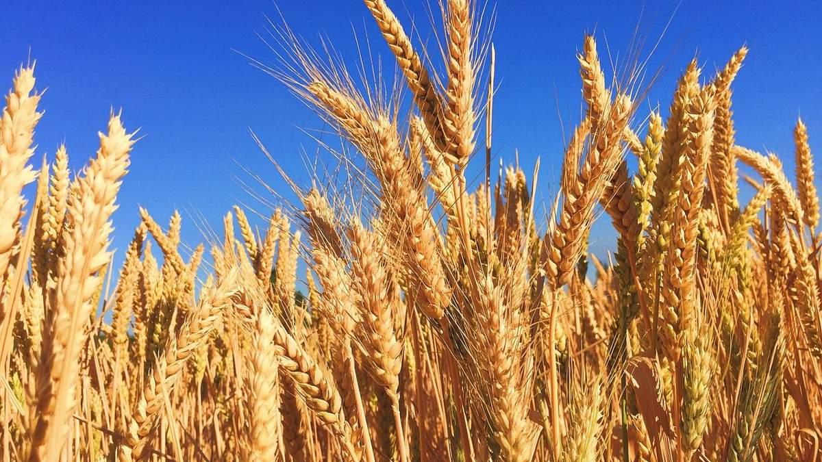 Україна –гарант продовольчої безпеки