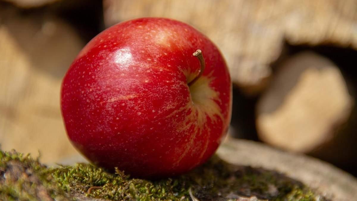 Флоріна –найбільш стійкий до посухи сорт яблук