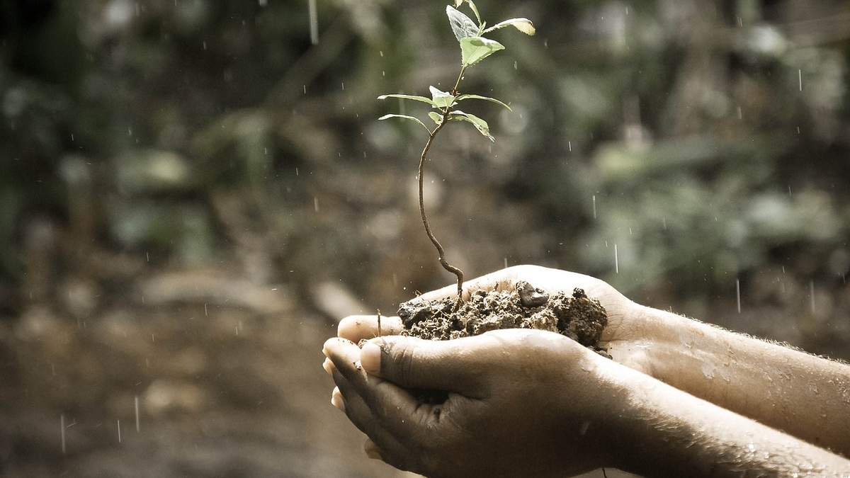 Деградація ґрунтів в Україні може стати незворотною