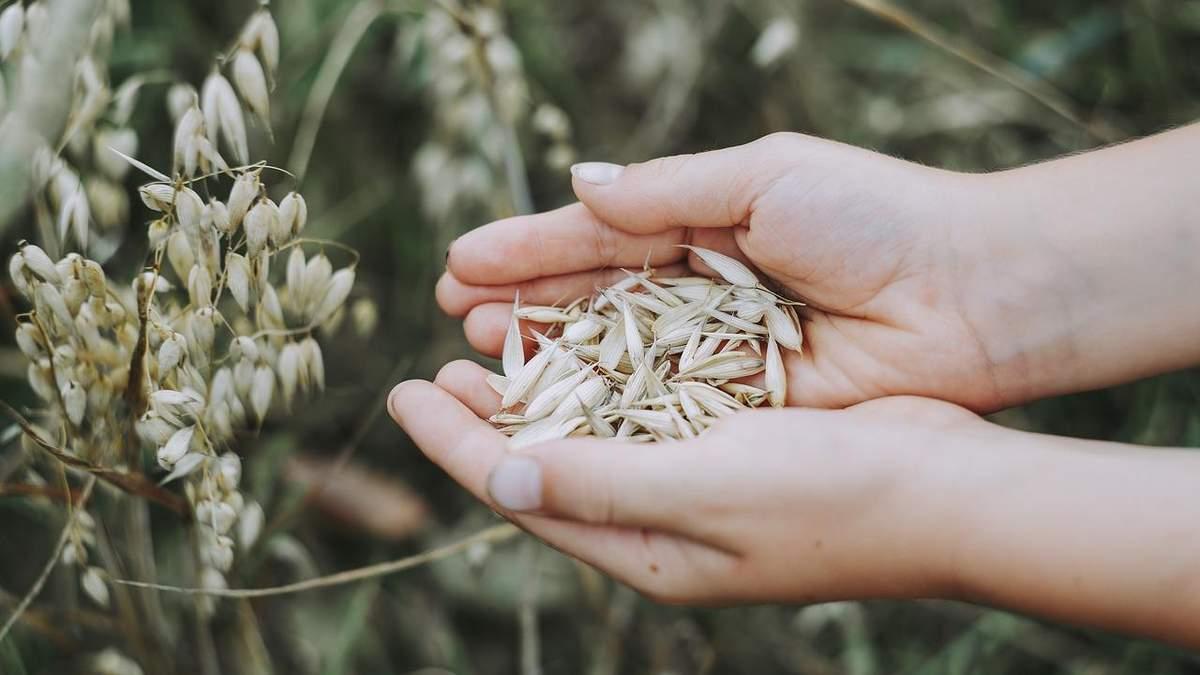 Україна планує збільшити експорт зерна до Китаю у рази