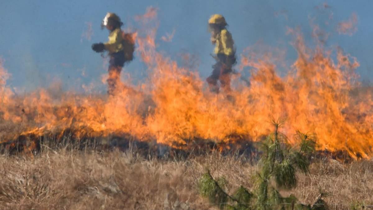 Сжигание травы и листьев: вред для окружающей среды и людей, штрафы и мифы