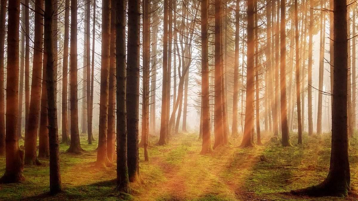 Україна –рекордсмен з озеленення планети