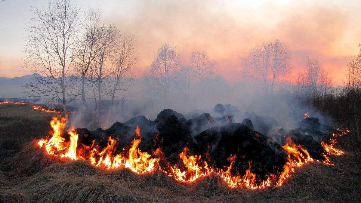Украина запрещает, Украине позволяют, украинцы как жгли, так и жгут: важнейшие агроновости