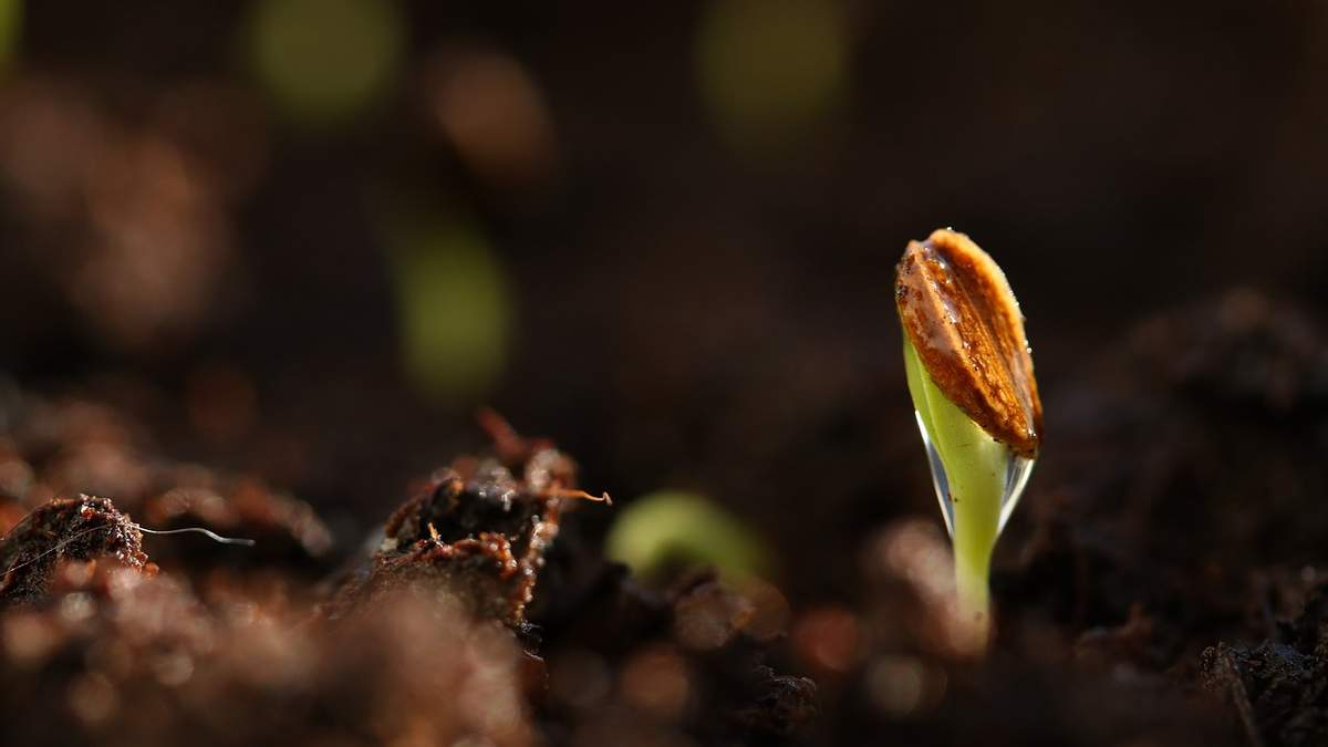 Розвиток посівів в Україні сповільнився