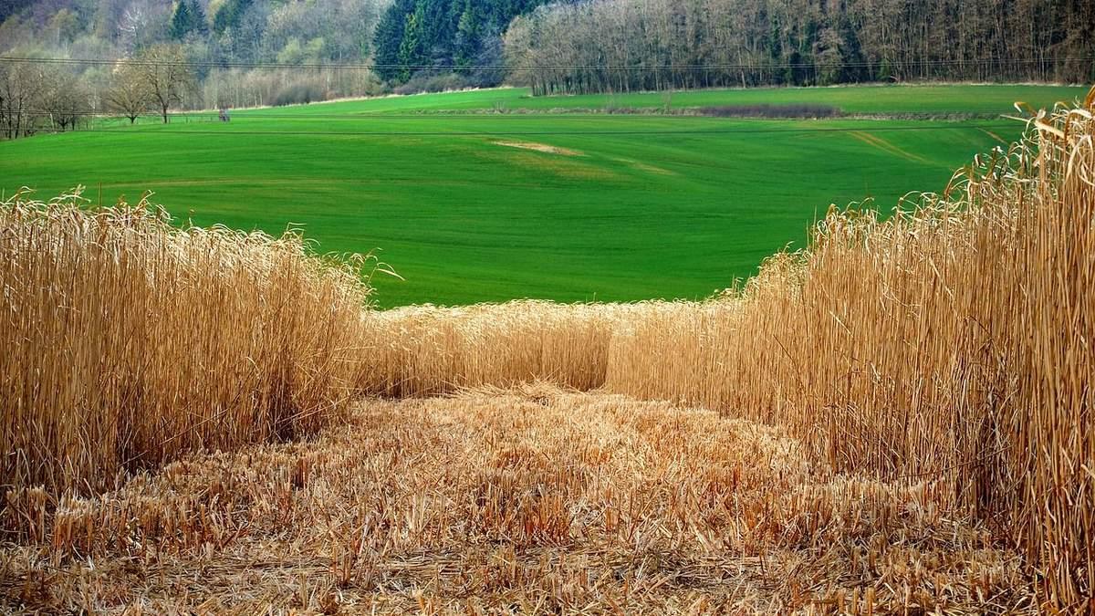 Малопродуктивные земли можно использовать в целях энергетики