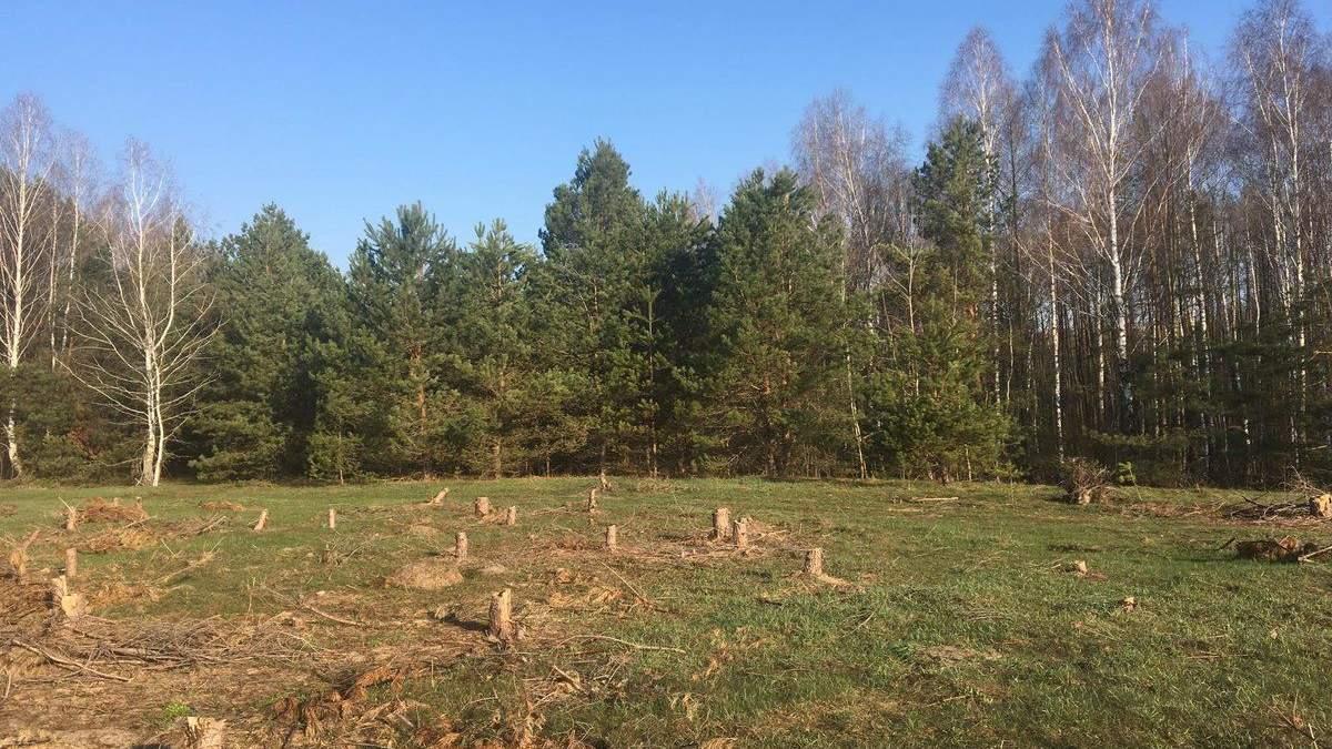 Знищений самосійний ліс