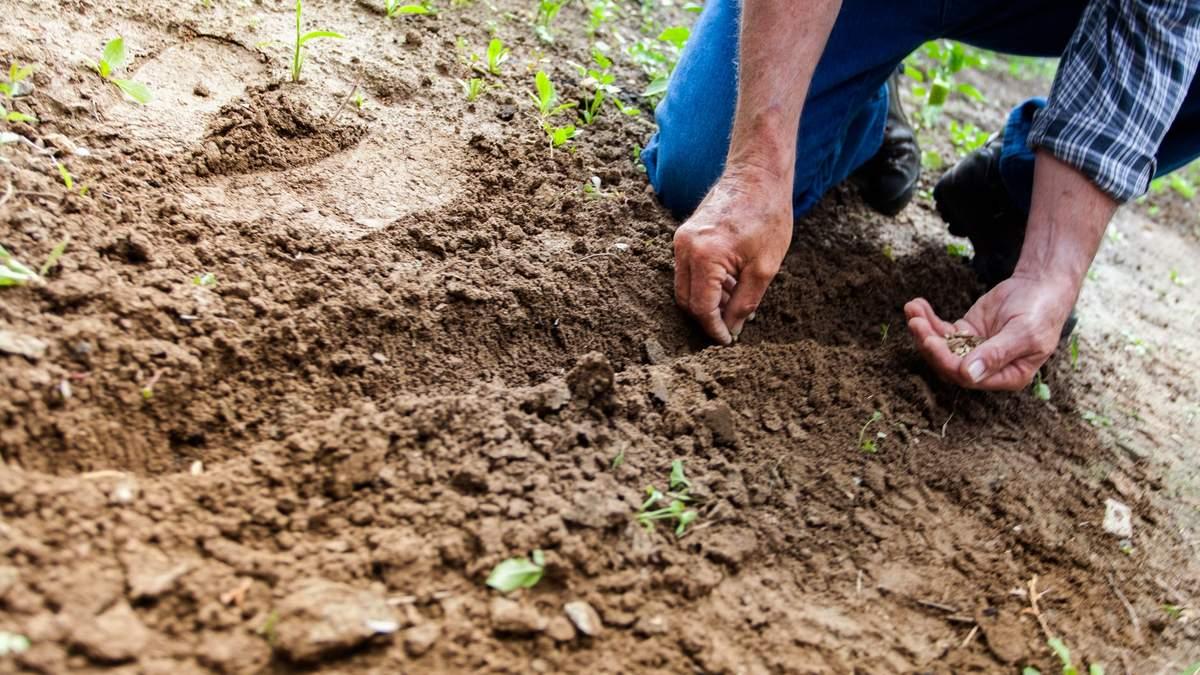 Лунный посевной календарь для огородника и садовода: июнь 2021 года