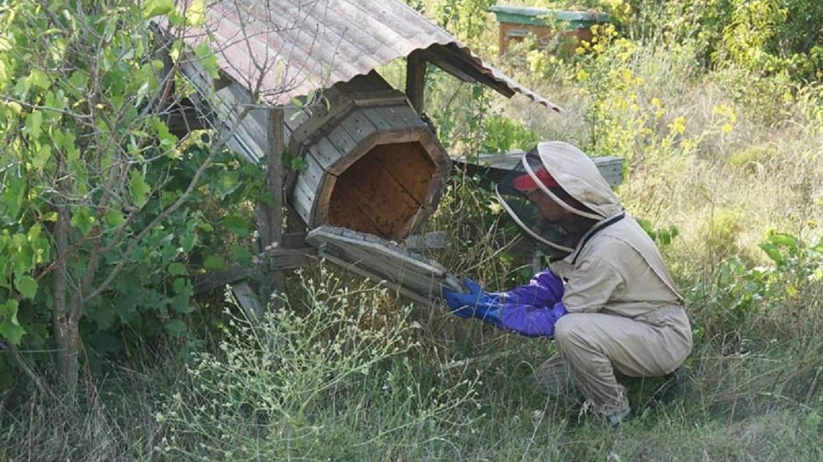 В Україні створять перший Медовий парк