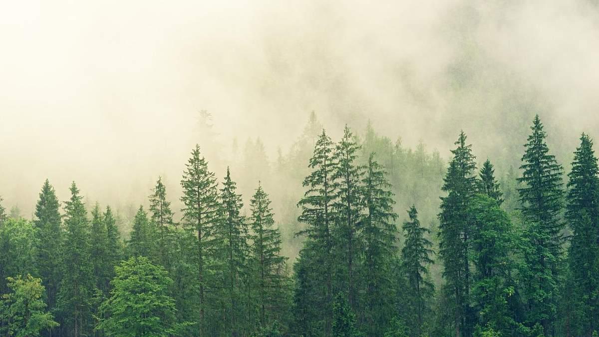 Леса Украины: сколько деревьев надо высадить в ближайшие годы
