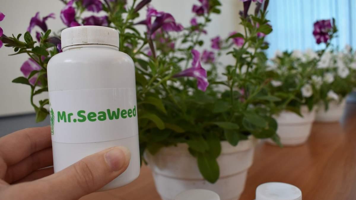 Удобрение из водорослей: украинская студентка создала инновацию