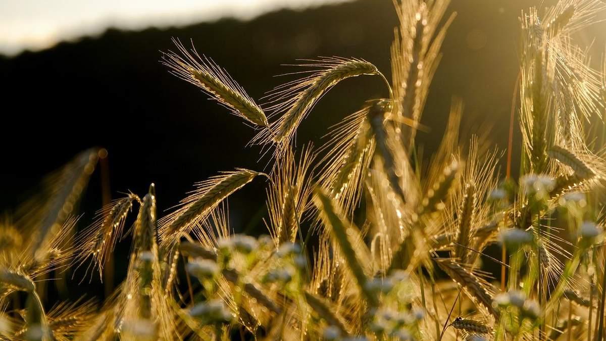 Украина существенно сократила экспорт зерна