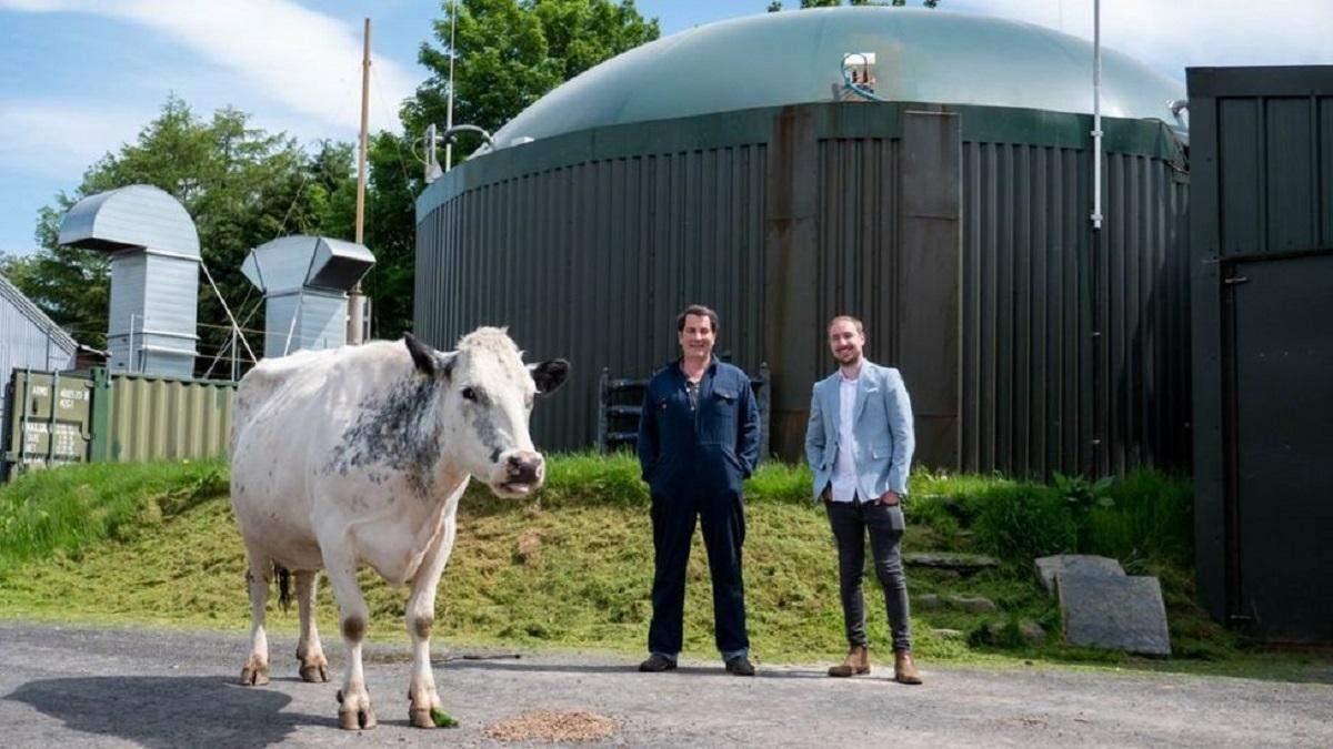 Криптовалюта і коров'ячий гній: оригінальне виробництво енергії для майнінгу