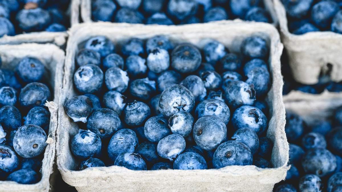 У Польщі очікують хороший урожай найдорожчої ягоди –лохини