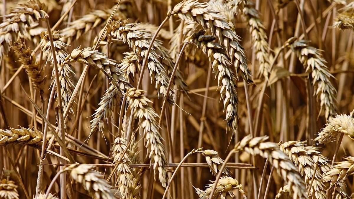 Украина существенно снизила показатели экспорта зерна