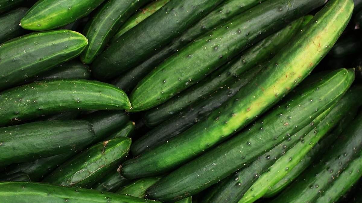 В Японії вивели новий сорт тепличного огірка