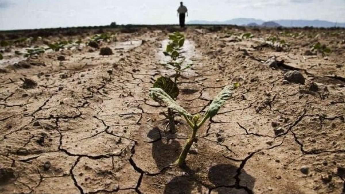 Україна –серед лідерів країн, в яких може виникнути посуха