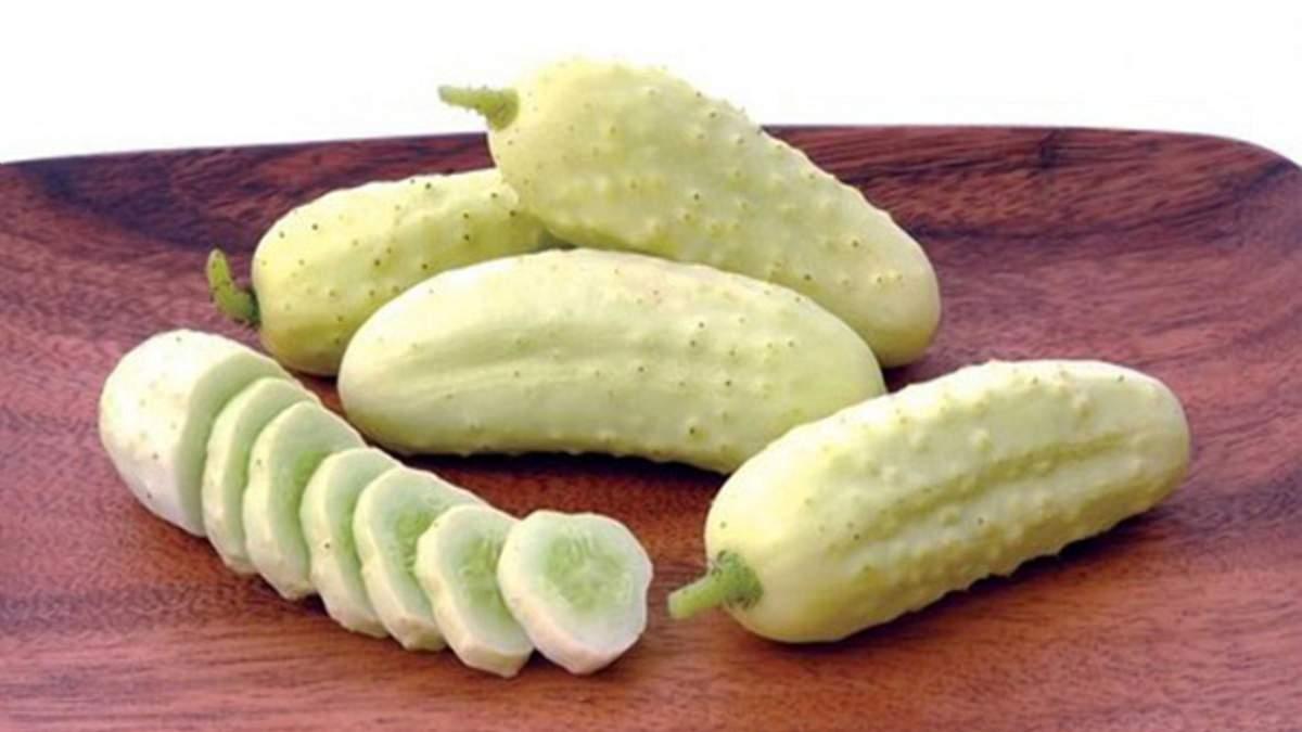 Огірок без гіркого смаку: вчені вивели новий овоч