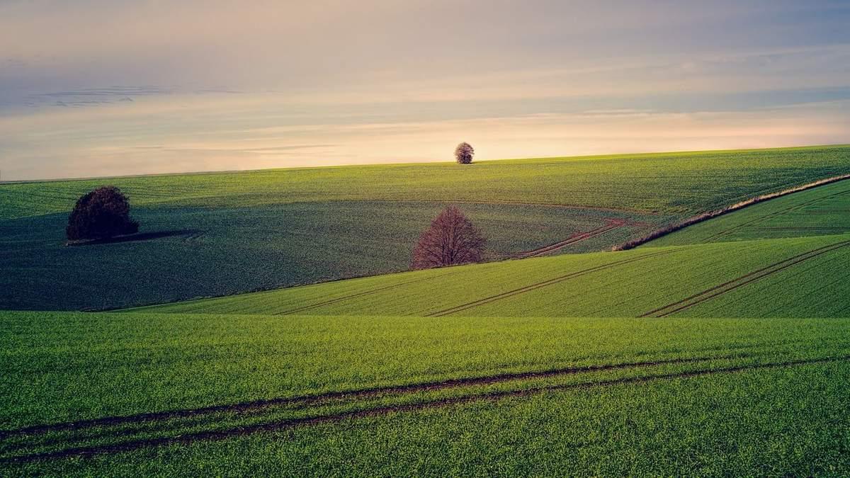 Захист рослин: які типові помилки аграріїв
