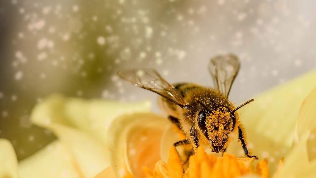 """""""Укрпошта"""" призупинила доставку бджіл: причина"""