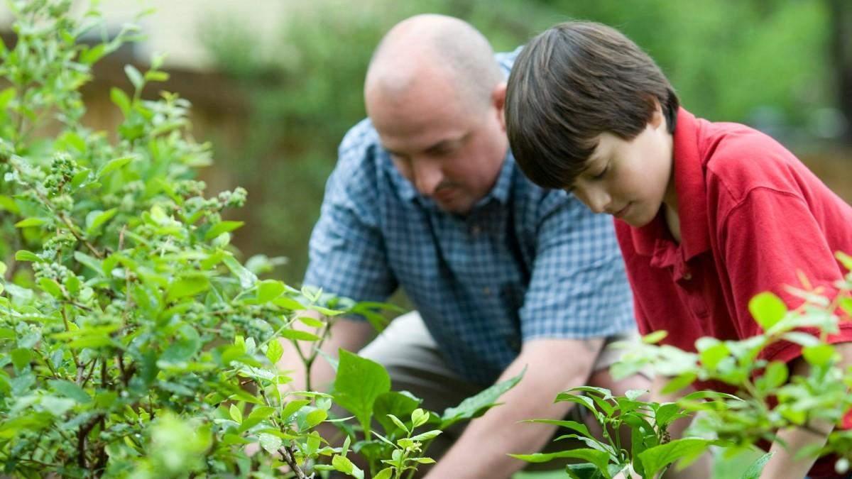 Місячний посівний календар для городника і садівника: липень 2021 року