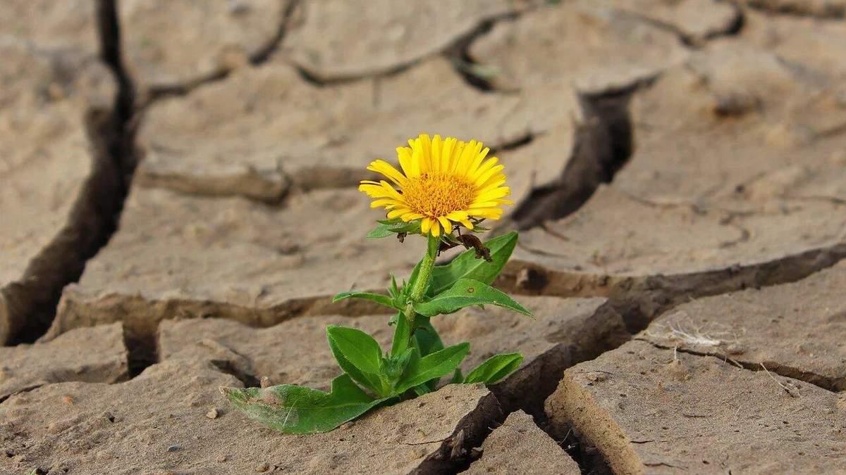 Засуха уничтожает земледелие на юге Украины: какой выход