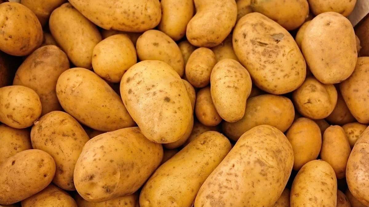 Гибридный картофель с высокой урожайностью: удивительная разработка китайских ученых