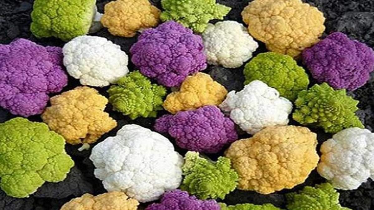 Кольорова капуста: в Украні почали вирощувати унікальний овоч