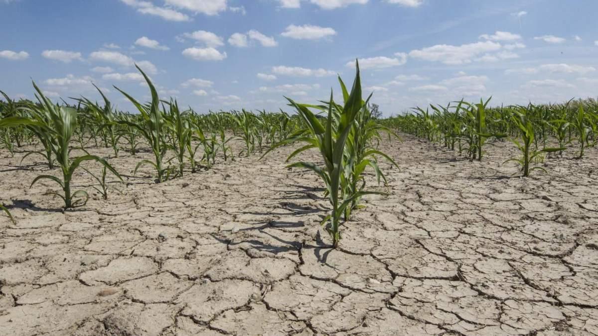 Україні загрожує засуха