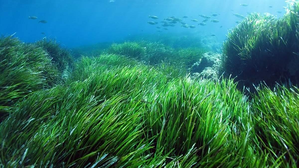 Штучні шуми, спричинені людьми, можуть нашкодити морським водоростям