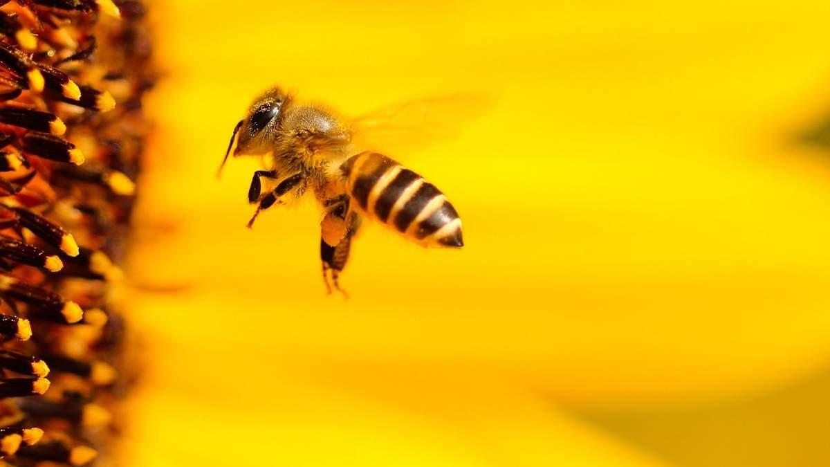 Бджола