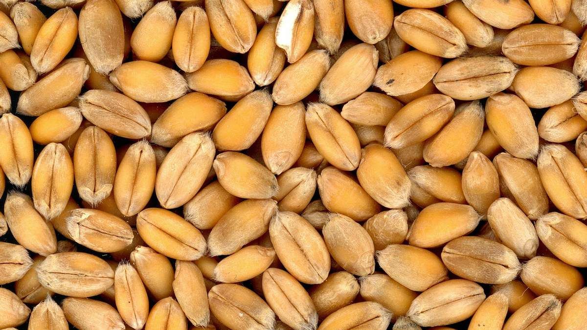 Самые рентабельные сельхозкультуры следующего агросезона: какие и почему