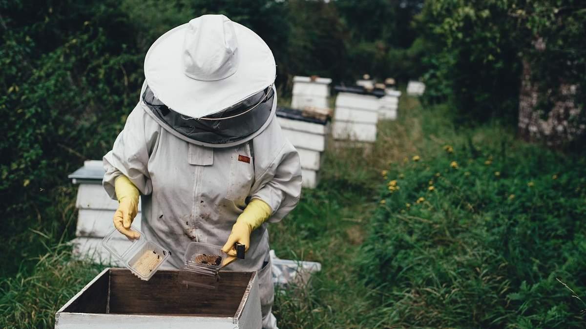 Пандемия спровоцировала рост цен на продукты пчеловодства - Украина новости - Агро