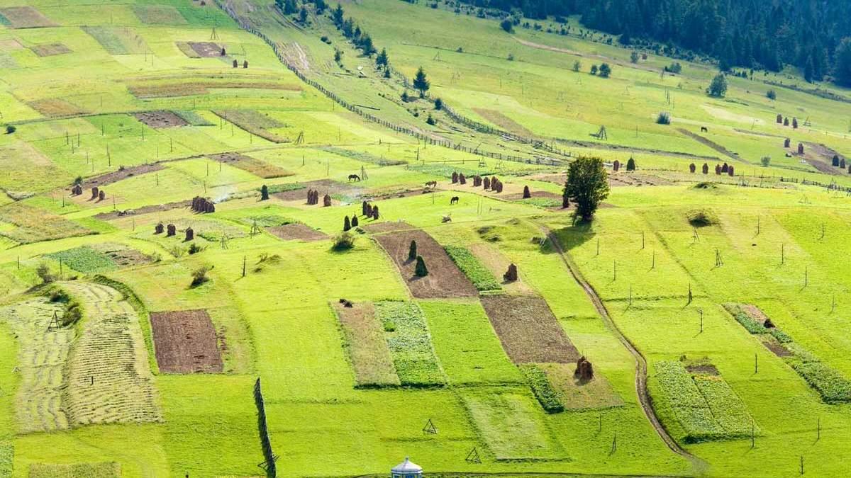 Рынок земли: когда ожидать подорожания земельных паев - Агро