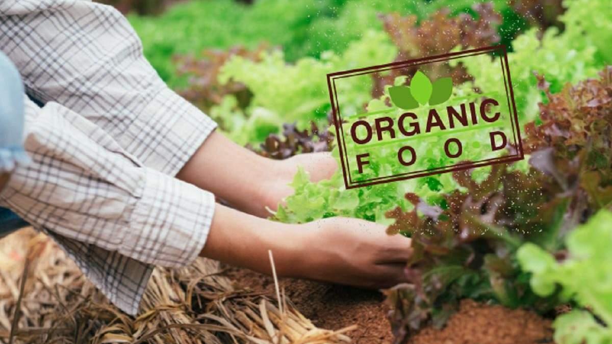 Украинские органические продукты: куда экспортируем и сколько зарабатываем - Украина новости - Агро