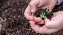 Экспорт украинских семян достиг рекордного показателя