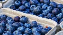 Наибольшая перспектива: ягоды завоевывают популярность на рынке
