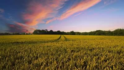 Урожайність агрокультур в світі знизиться на 10%, –прогноз