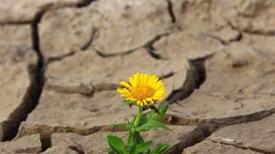 Документи для купівлі-продажу землі та прогнози метеоролога: найважливіші агроновини тижня