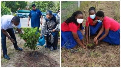 У Гані за один день висадили 5 мільйонів дерев