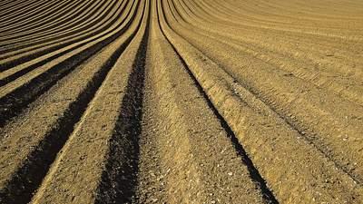 Ціна на землю, проблеми заробітчан, 1 мільйон на гектарі лаванди: найважливіші агроновини тижня