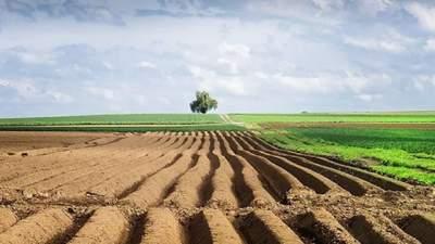 Цена земли, дорогой картофель и выгодный топинамбур: важнейшие агроновости недели
