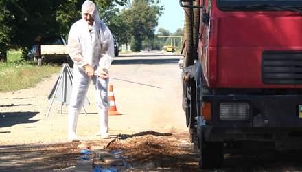 На Львівщині спалахнула африканська чума: що відомо