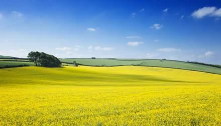 Выращивание рапса в Украине: залог высокого урожая – комплексный подход