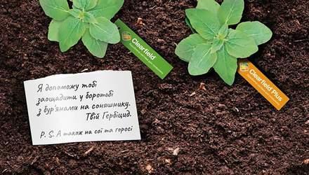 Пульс вашего урожая: как спасти подсолнухи от сорняков